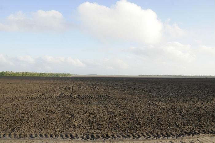 A plantação de arroz da propriedade de Introvini em frente às terras de Vicente/Foto: Geraldo Iensen