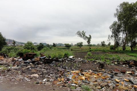 zimbabwe urban agriculture