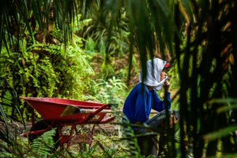 Yuliana works with her husband on a plantation by collecting loose palm fruit. CIFOR Photo/Icaro Cooke Vieira