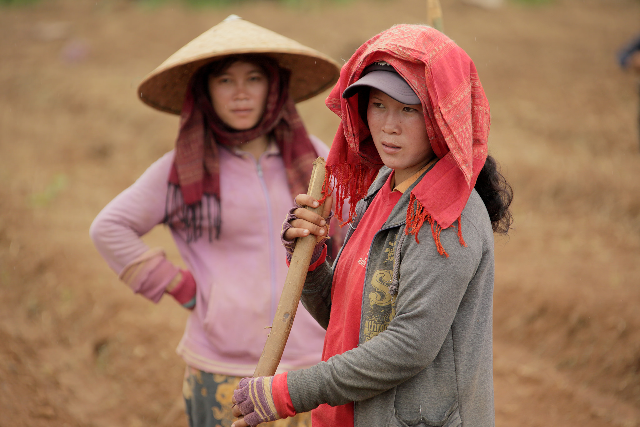 Laos agriculture