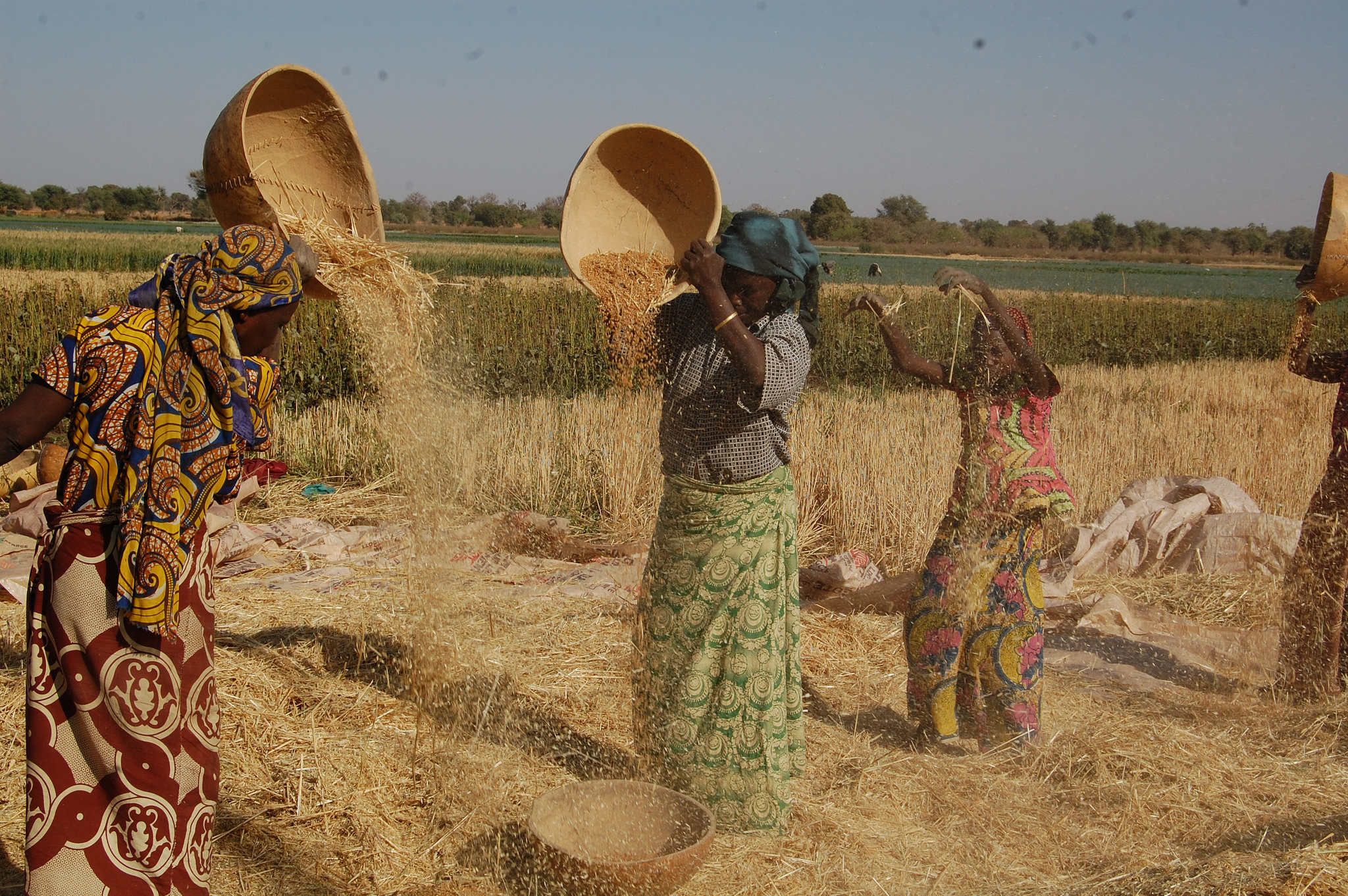 Nigeria agriculture photo by ICARDA