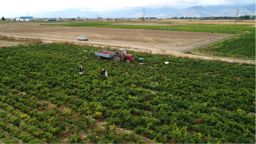 Agricultural production in Egri land consolidation project area, North Macedonia