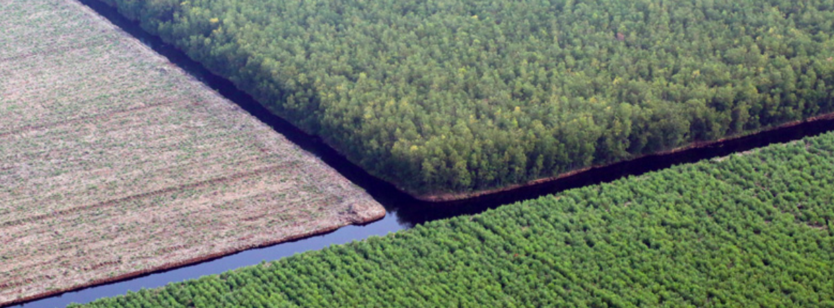 Paper giant APP linked to Indonesia peat clearing despite sustainability vow