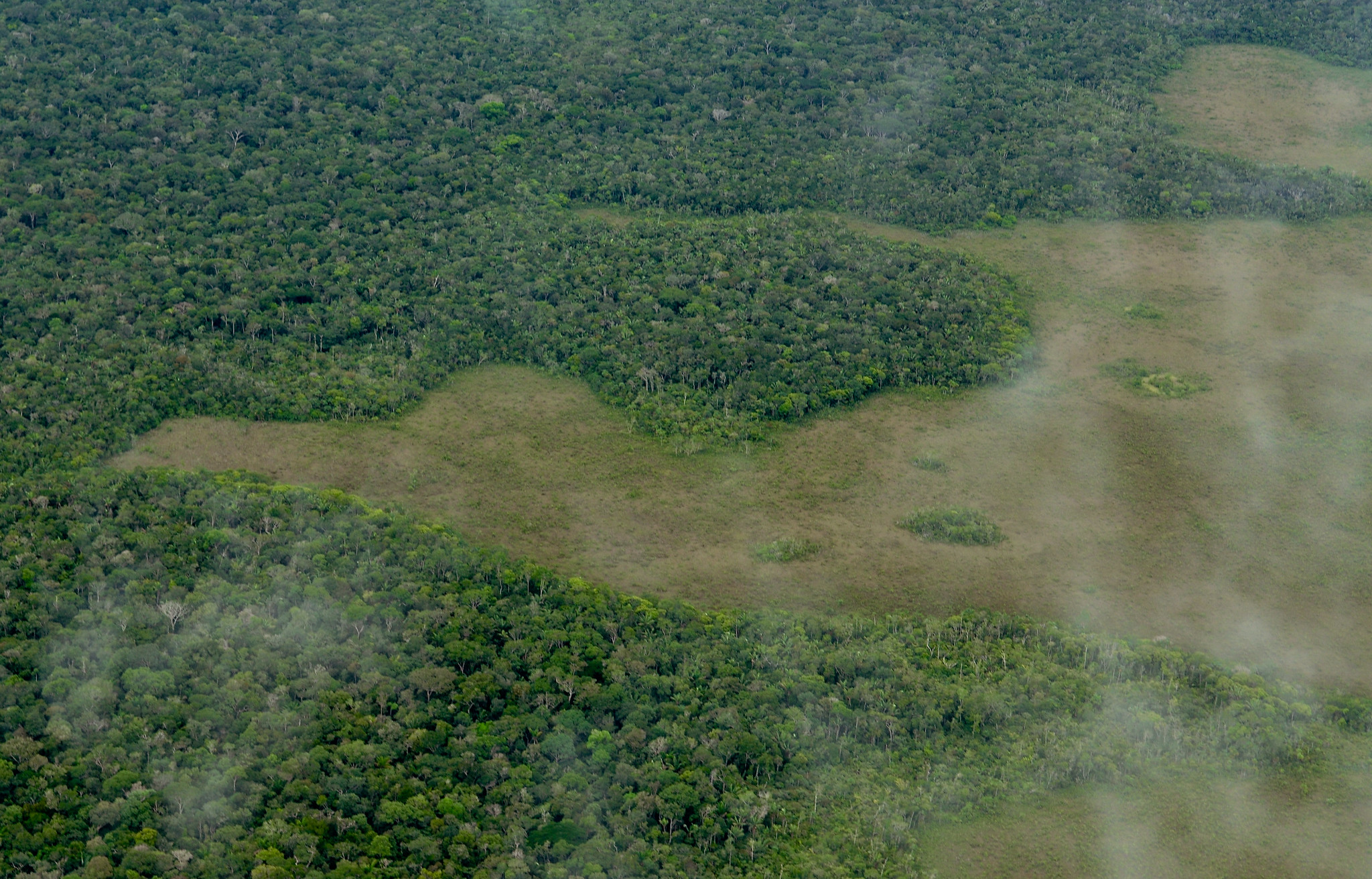 Aerial view of the Amazon rainforest, near Manaus. Photo by Neil Palmer/CIAT