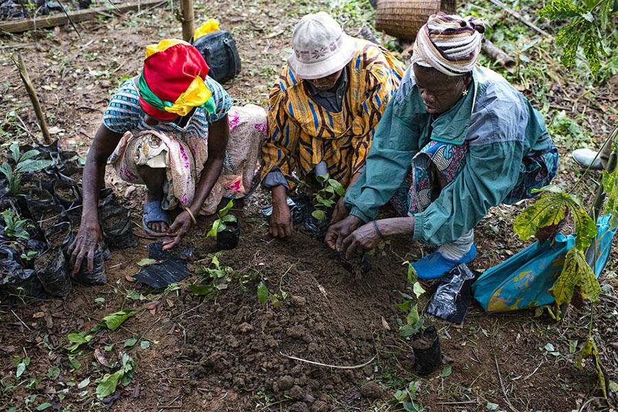 land reform africa
