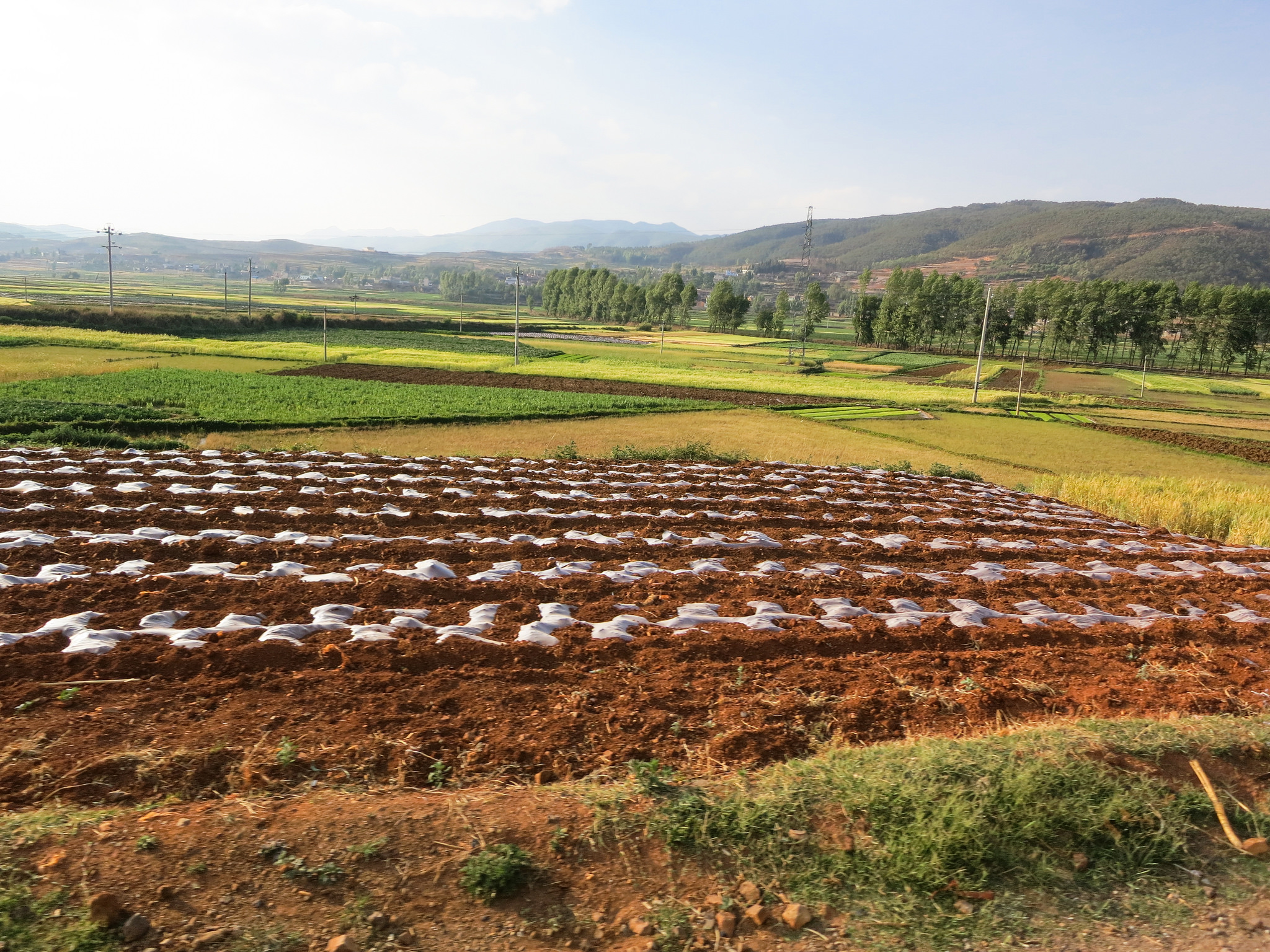 china agricultural land food security