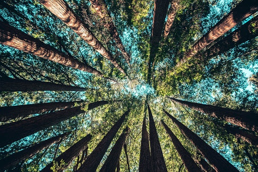 Sustainable Forests and Reaching the SDGs