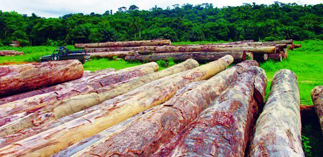 Em quase toda a província muitas árvores são derrubadas de forma anárquica  Fotografia: António Soares | Edições Novembro