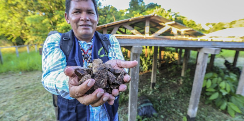 Sergio Perea, president of the Tres Islas community in Peru, presenting Brazil nuts. Photo credit: Juan Carlos Huayllapuma/CIFOR