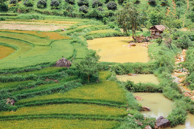 Figure 4: Terraced Crops & River, Dien Bien Province Vietnam (by Adam Cohn)