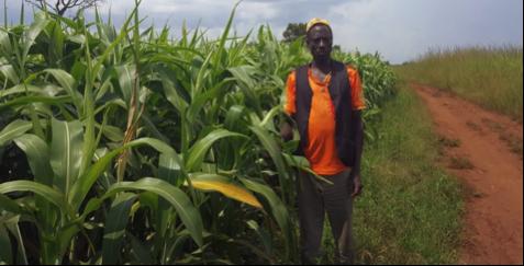 Smallholder Farmer Abdulahi Mohammod 48, cultivating sorghum on his land