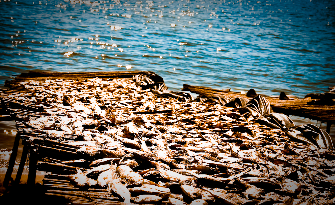 Fish Market Lake Malawi James Verster CC BY-NC-ND 2.0