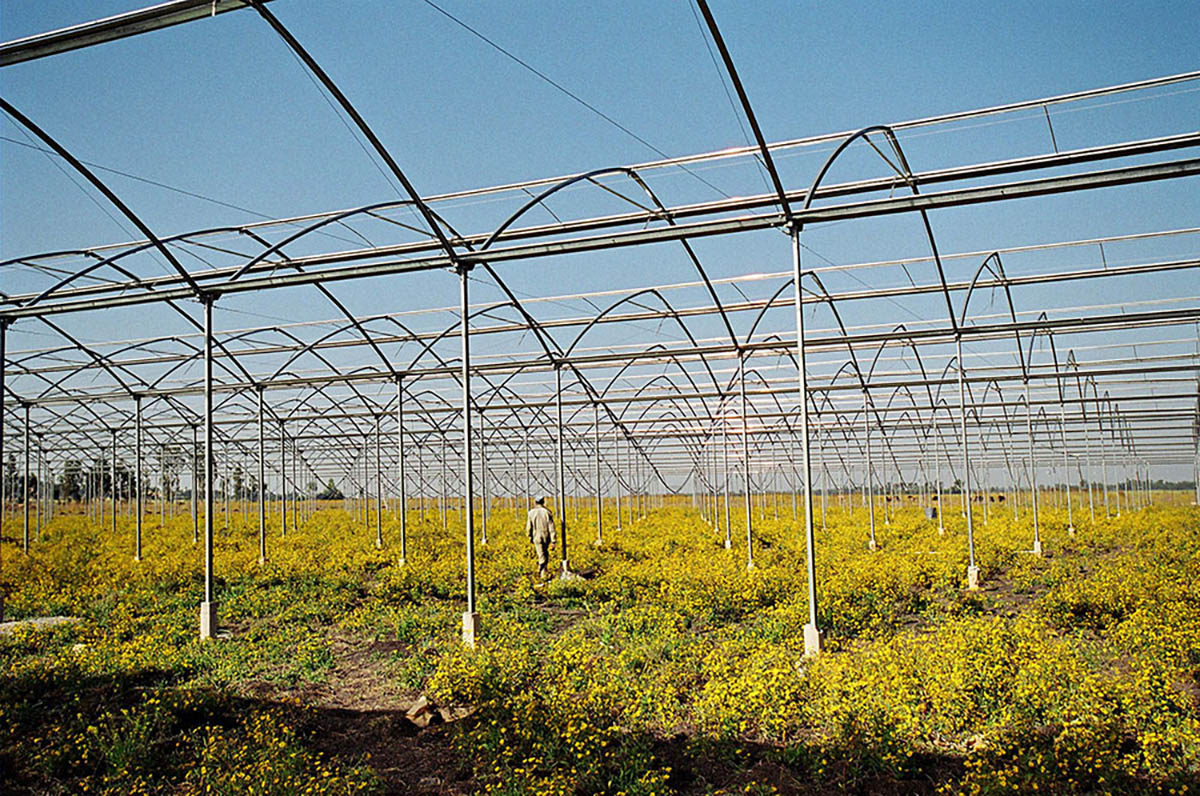 Construction of a greenhouse.The Golden Rose plantation, photo by ILO, CC BY-NC-ND 2 license