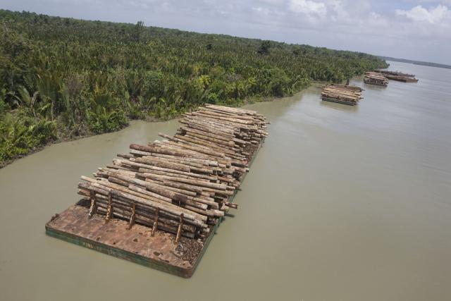Turama Forest, Papua New Guinea - Greenpeace, 2008