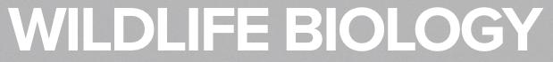 nordic board logo