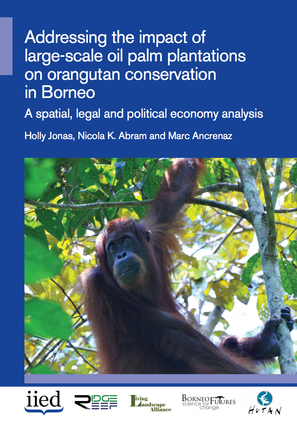 Addressing the impact of large-scale oil palm plantations on orangutan conservation in Borneo: A spatial, legal and political economy analysis cover image