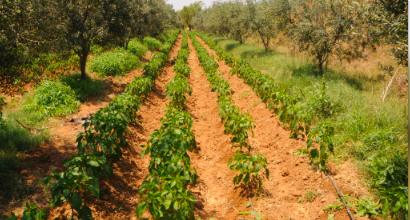 agriculturetunisia