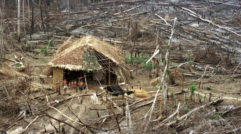World's tropical forests and people imperiled by legal rollbacks under COVID-19