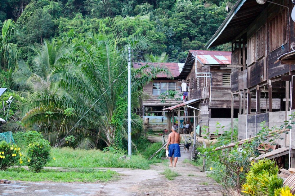 Amid Pandemic, Malaysia Grants Timber Giant Logging Permit on Indigenous Land in Borneo