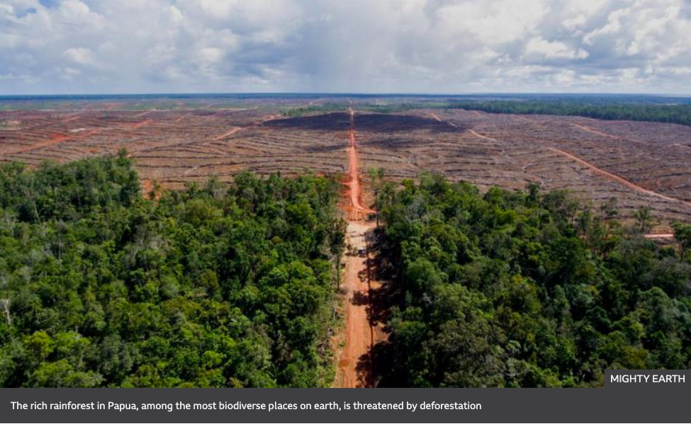 The burning scar: Inside the destruction of Asia's last rainforests