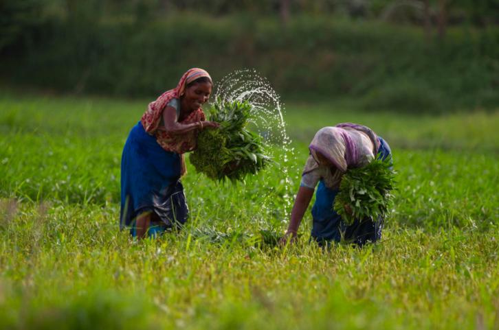 Women twice as active as men in farm activities