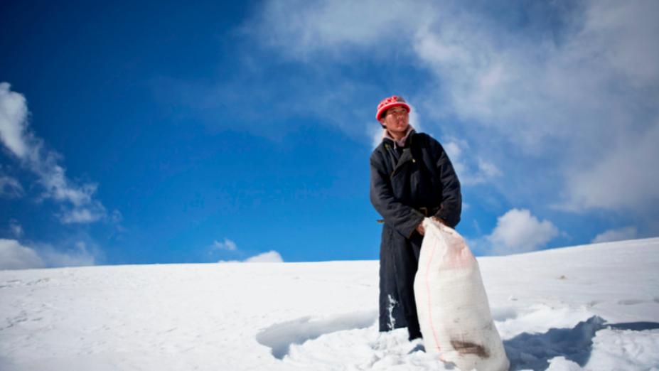Mongolia's pitiless dzud