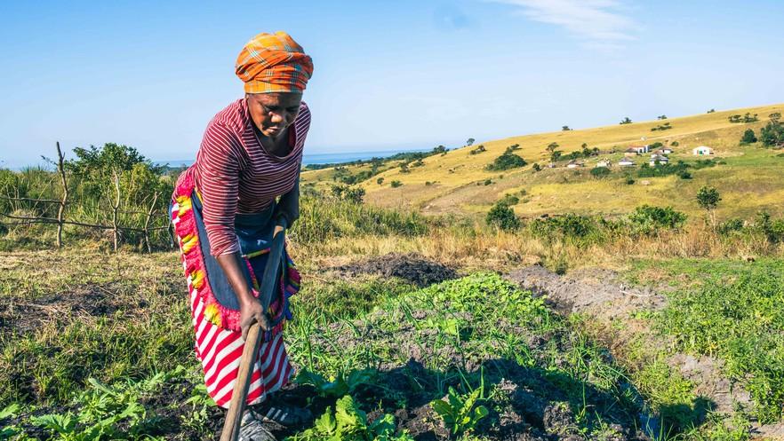 Xolobeni farmer, Photo by Daniel Steyn/GroundUp (CC BY-NC-ND 2.0)
