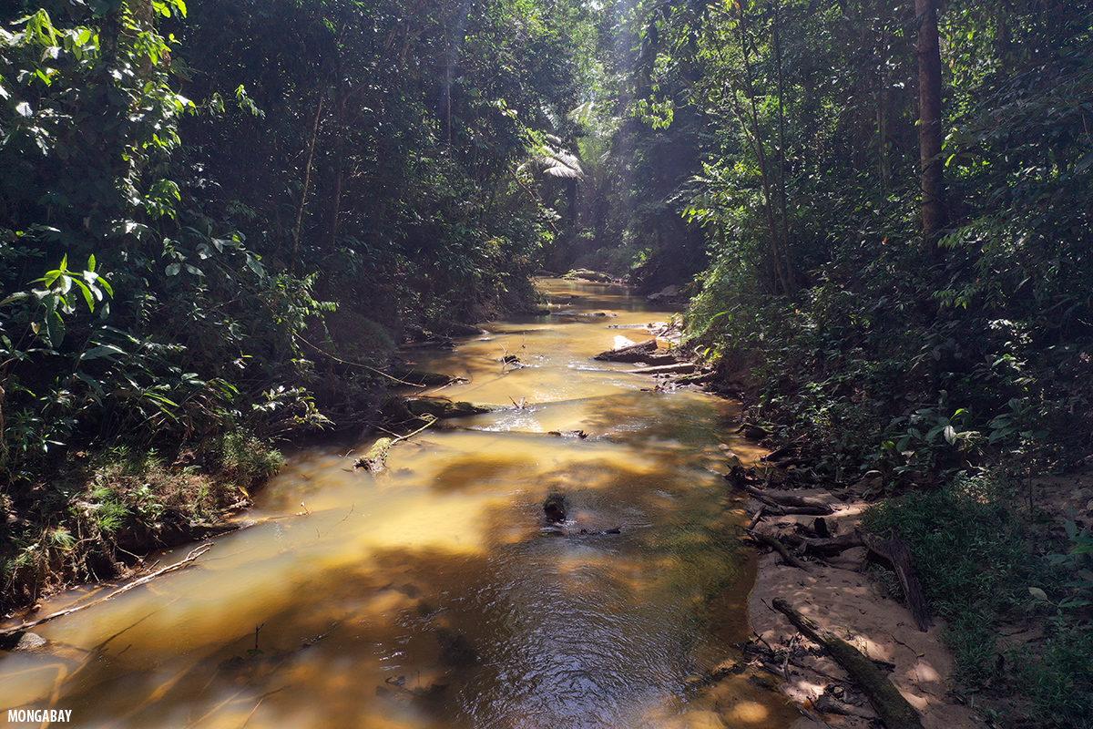 Arroyo en la selva amazónica colombiana. Foto: Rhett A. Butler / Mongabay.