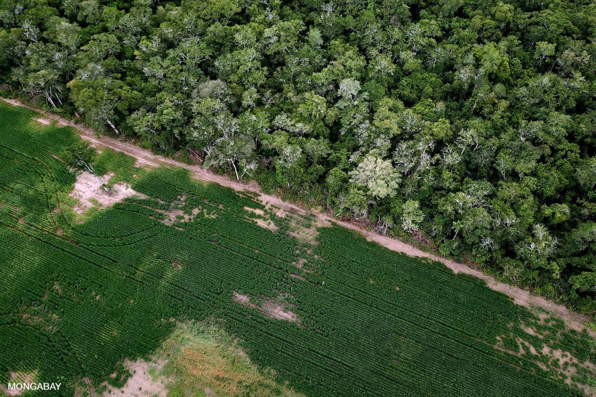 Campo de soya y selva en la zona de transición de los biomas de El Cerrado, Chaco y Amazonía. Imagen: Rhett A. Butler/Mongabay.