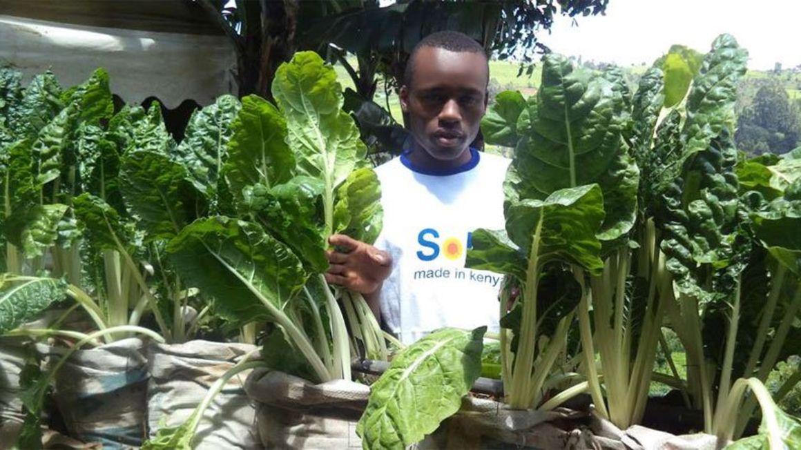 Kenyan youth are turning to farming. FILE PHOTO   NMG