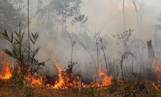 Foto: 17ª Brigada de Infantaria de Selva/Rondônia