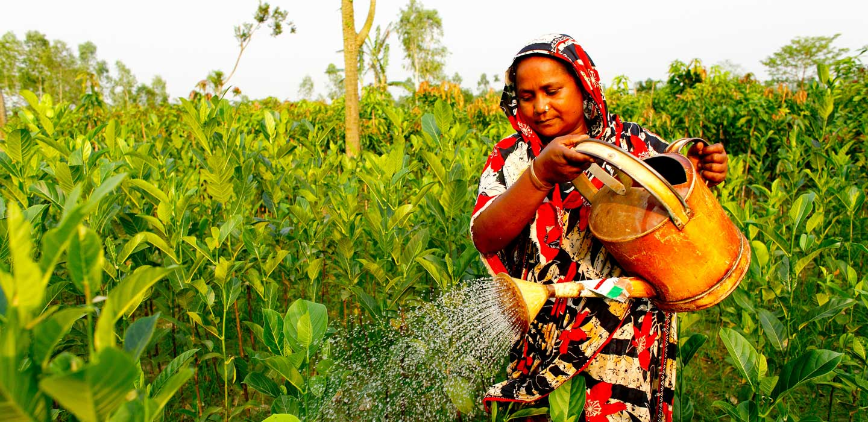 Sommet des Nations Unies sur les systèmes alimentaires/FIDA