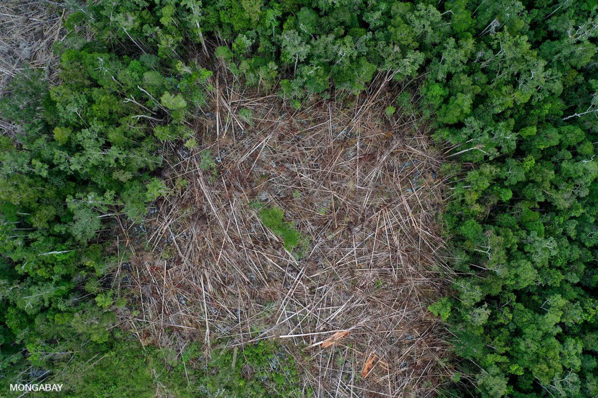 Deforestación en Kapuas Hulu, Borneo occidental. Imagen: Rhett A. Butler/Mongabay.