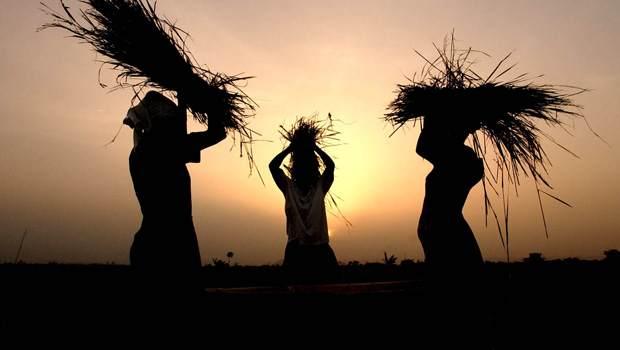 original_ghana-farmers.jpg