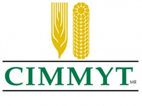 International Maize and Wheat Improvement Center logo