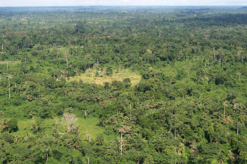 1200px-Liberia_tropical_forest.jpg