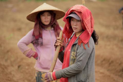 Laos agriculture