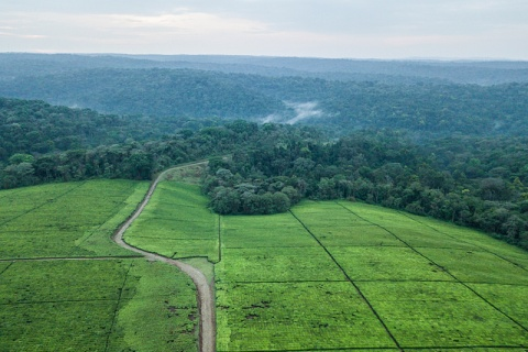 Aerial view of Southwest Mau Forest and neighbouring tea estates. Photo by Patrick Sheperd/CIFOR