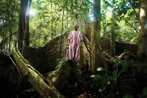 Fonte: Povo da Floresta