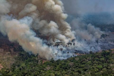 Foto: Victor Moriyama/Greenpeace via AFP