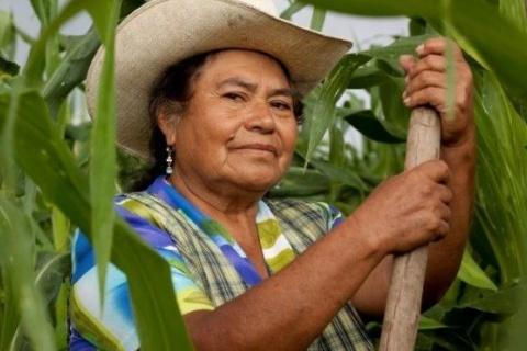 Foto: Divulgação – Fonte: Agência Nacional de Assistência Técnica e Extensão Rural – ANATER