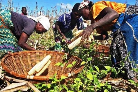 Fonte: Agricultura e Mar