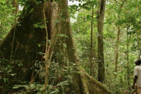 forêt togo