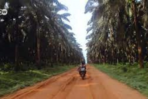 Cameroon_accaparrement de terres - by DW
