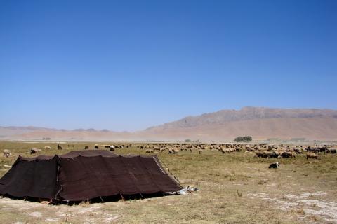 pastoralists iran