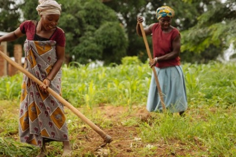 Women using hoes in a crop field in Kilosa, Tanzania. Access and control over land is essential to strengthen the rights of African women farmers