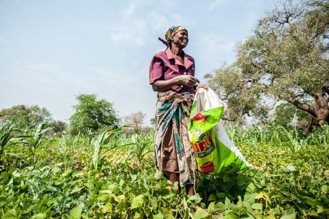 Mozambique agriculture