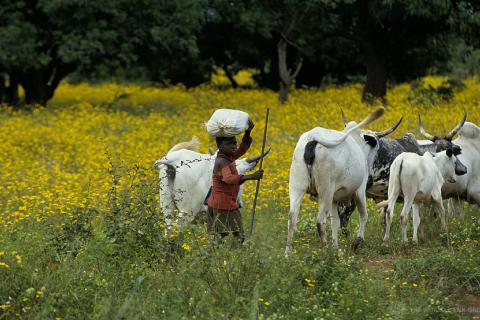 Flickr Nigeria agriculture