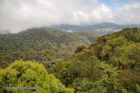 Flickr Thailand state forest