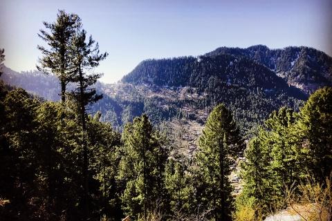 Flickr Pakistan forest